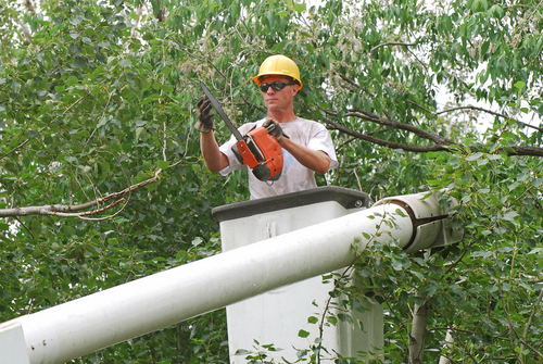 A BGE employee carefully trims a tree near wires in order to prevent future power outages.