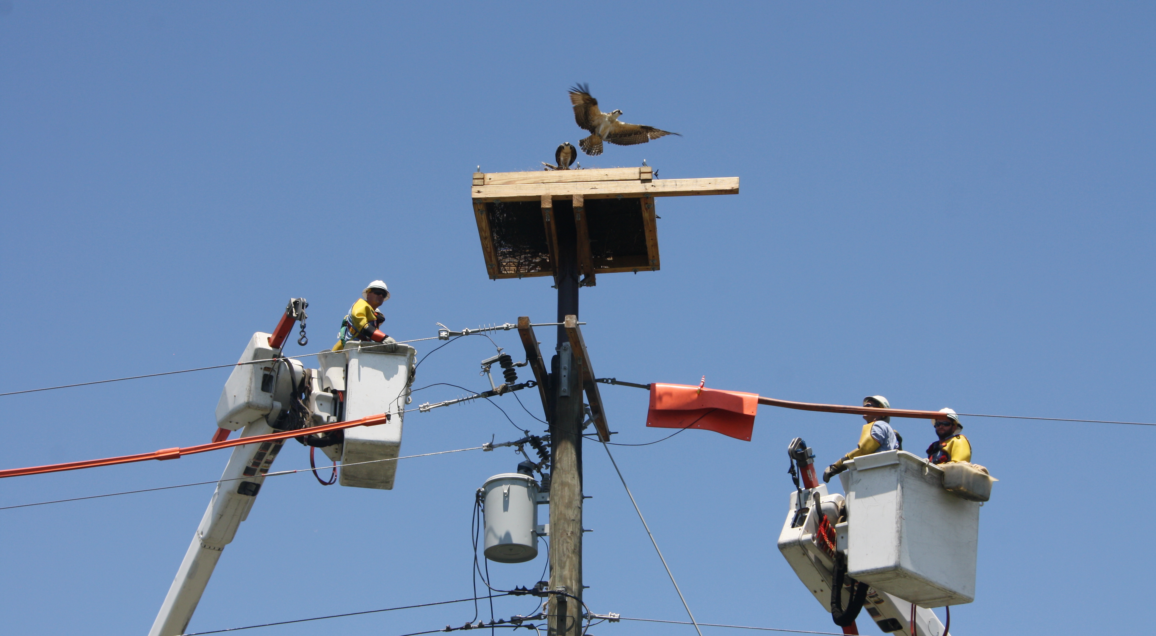 Osprey Watch | Baltimore Gas and Electric Company