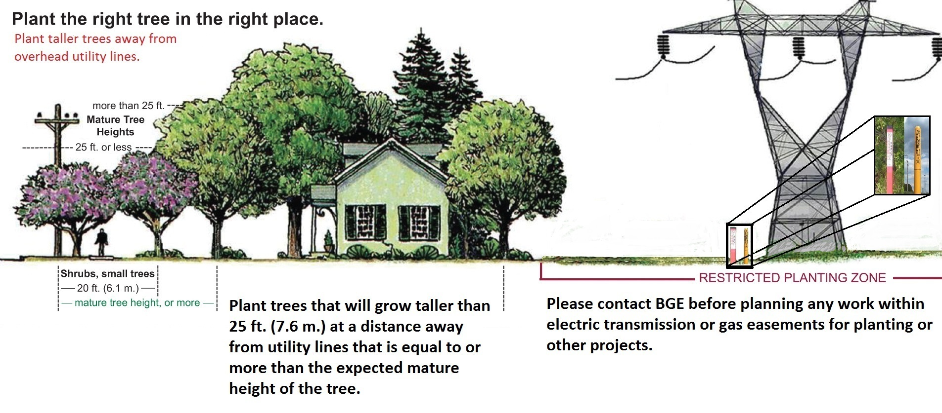 Plant the Right Tree in the Right Place | Baltimore Gas and ...
